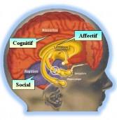 Teorías sobre el cerebro